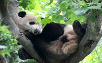 #MundoAnimal 