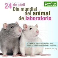 Hoy es el da del animal &quot;de&quot; laboratorio. No hay existencia ms efmera y miserable que la de los animales que se escogen pa...